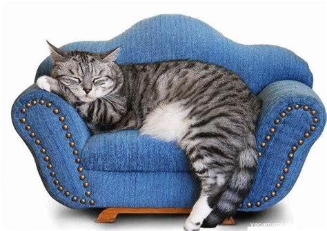 divano gatto non sai come arredare casa chiedi al micio vegamami