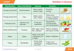 learnhive icse grade 7 biology nutrition in animals and
