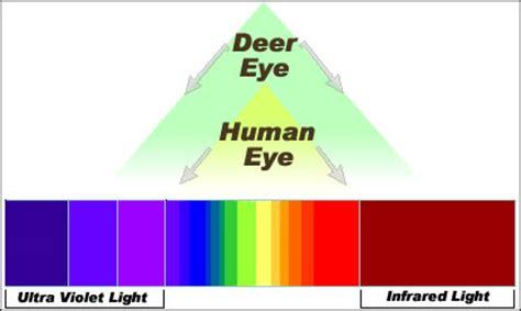 do deer see color how deer see you wildlife