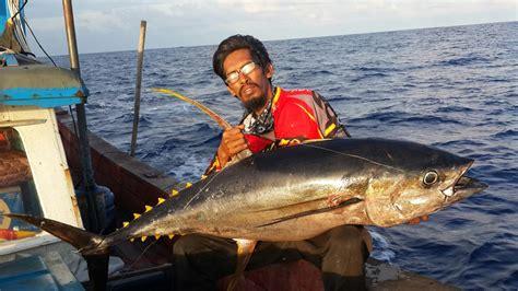 Pancing Tuna Cara Mancing Tuna Sirip Kuning