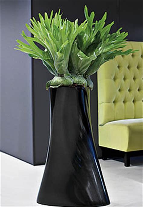 pflanzen mit wenig licht pflanzen f 252 r wohnr 228 ume mit wenig licht gartenblog wyss