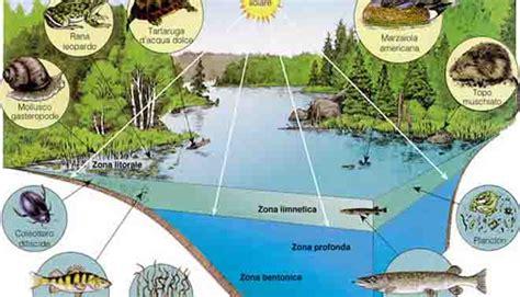 catena alimentare mare ecosistema definizione
