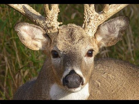 Ts Deers deer vision how it works and how to stay