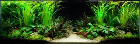 Aquascaping Layouts A Two Sided Live Planted Aquarium Layout Live Planted