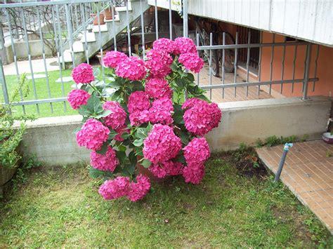 nomi di fiori in francese i miei fiori le parole dei fiori