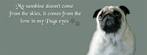 pug quotes 89 best images about pug covers on puppys pug and the nut