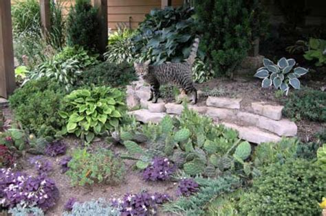 rock garden perennials rock garden perennials alpine perennials the rock garden