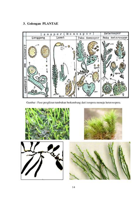 modul 2 keanekaragaman tumbuhan
