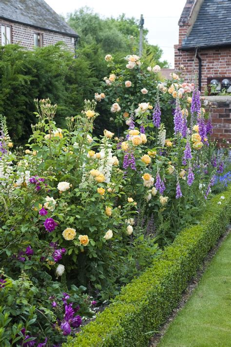 best flowers for garden roses in mixed borders gallery