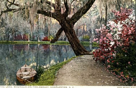 magnolia plantation and gardens charleston sc camellias