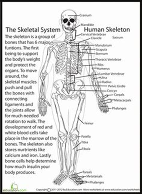 diagram of the skeletal system worksheet food web acidification poses grave threats to