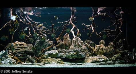 aquascape and new fish in the cichlid tank 17 best images about aquascaping on editor ea