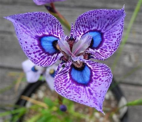 imagenes lindas raras flores mais lindas e raras do mundo fotos toda atual