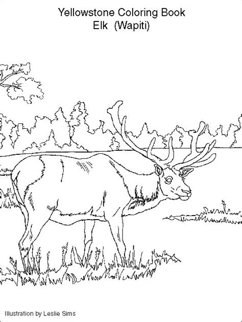 elk coloring page yellowstone vacation pinterest