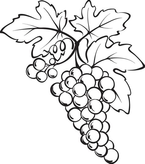 grapes coloring pages to print free coloring pages of grape bunches