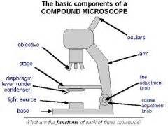 Condenser Adjustment Knob by Bio 141 Compound Microscope Flashcards Cram