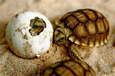 imagenes de tortugas blancas cuidados tortugas cuida tu mascota
