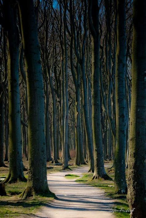 nienhagen germany trees 79 best images about can t miss places to see on earth on