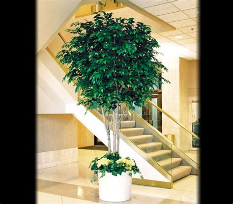 artificial tree uses artificial ficus benjamina trees silk ficus trees faux ficus benjamina tree