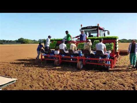 plantadores de mandioca arrancador de ramas de batata doce doovi
