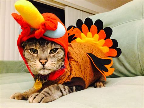 thanksgiving costume your daily happy thanksgiving and cats in turkey costumes