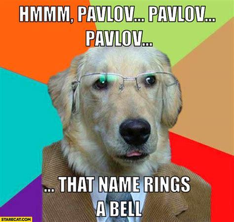 pavlov dogs pavlov that name rings a bell starecat