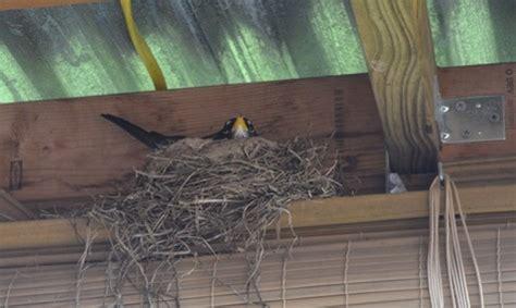 keep birds porch cheriaschatter