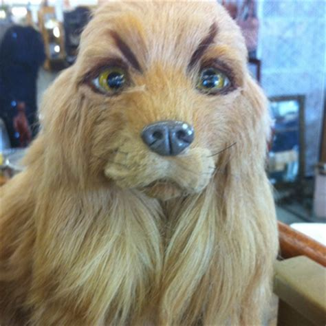 dogs with eyebrows 20 hilarious dogs with eyebrows dose of