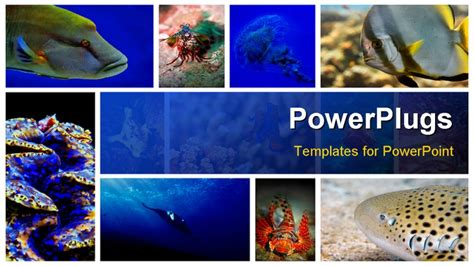 powerpoint themes underwater gallery for gt underwater powerpoint backgrounds