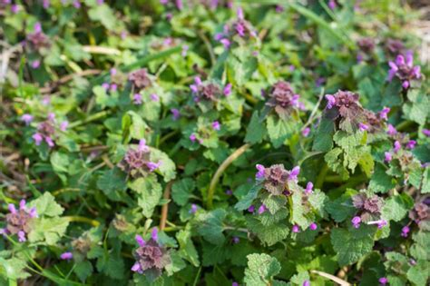 how to get rid of weeds in flower beds can you tell a weed from a flower toronto star