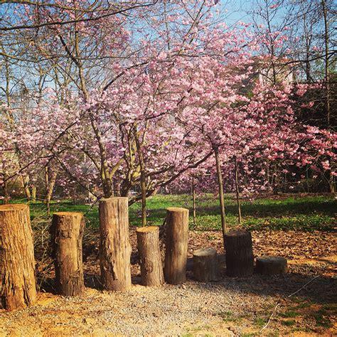 casa sull albero cuneo casa sull albero toulipier il giardino dei semplici