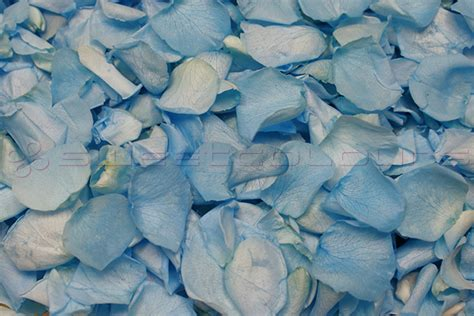 Box A Single Light Blue Preserved Flower Represent New Beginnings preserved petals light blue