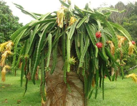 the fruit tree fruit tree florida