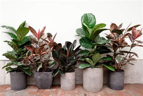 indoor garden maintenance indoor plant www pixshark images galleries with a