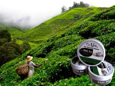 Teh Putih teh putih white tea indonesia olivetree white tea