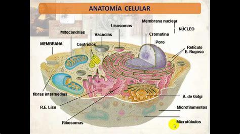 partes de la membrana celular estructura y clasificaci 243 n de la membrana celular youtube