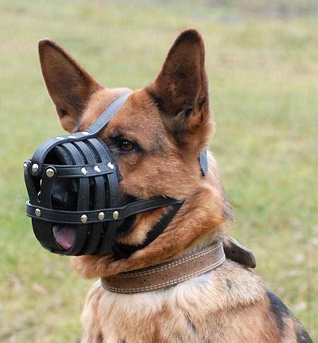 puppy muzzle muzzle