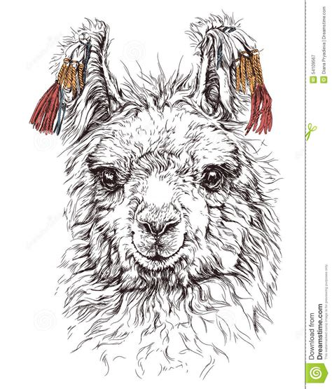 sketchbook lama realistic sketch of lama alpaca on white stock vector