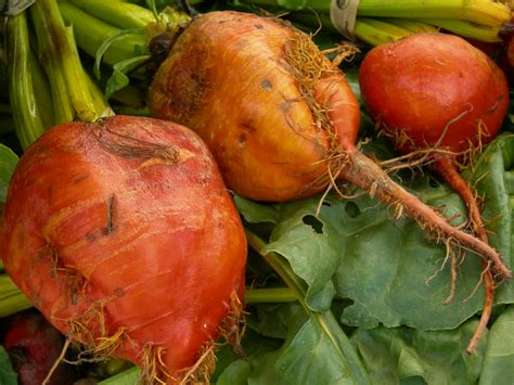 pictures of root vegetables file orange root vegetable 02 jpg