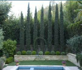 small backyard trees for privacy 25 best ideas about italian cypress trees on