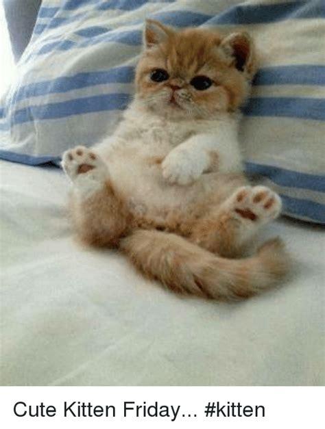 cute kitten friday kitten meme on sizzle