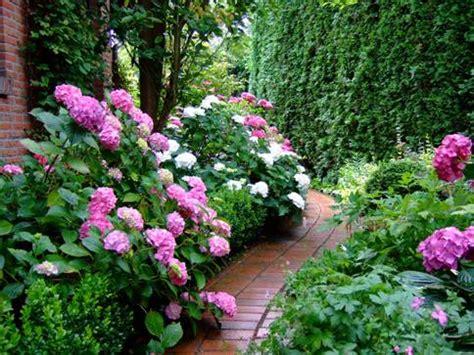 garten glück hortensien idee garten
