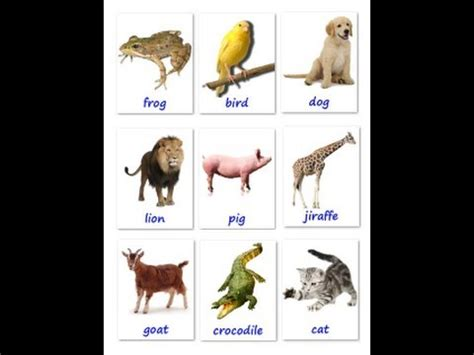 animals flashcards it s fun to learn learn english vocabulary for your baby the names of the
