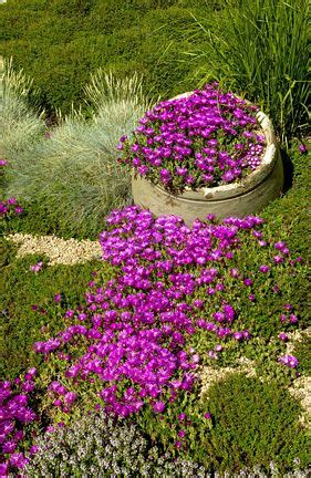 17 best images about selected plants on pinterest gardens perennial grasses and shade plants
