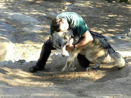 best animal sanctuaries in southern california 171 cbs los