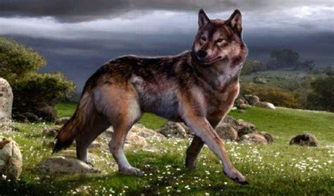 Lobo Gigante | lobo gigante