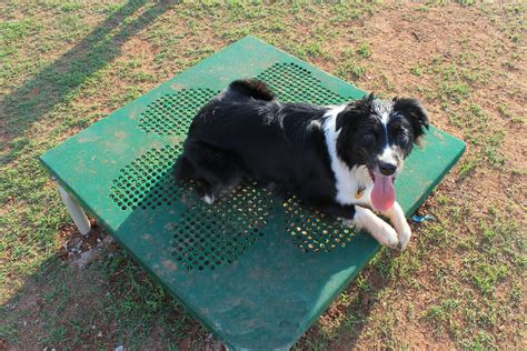 puppy paws edmond noah s park playgrounds brings agility to pets and pet owners at the edmond