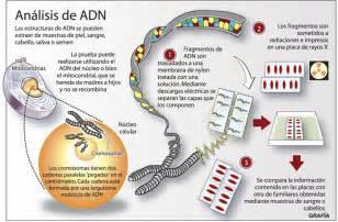 adn dibujo ciencia mundo contempor 225 neo ingener 237 a 233 tica