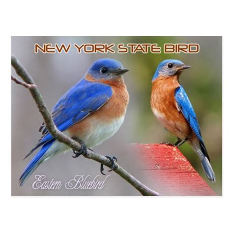 what is new york s state bird new york s state bird is the