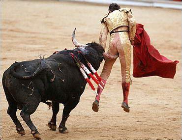 fighting facts bull fighting bull fighting facts